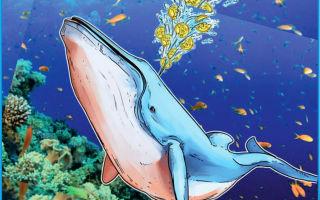 Сегодня рынком биткоинов управляют финансовые киты