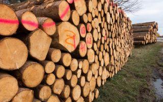 Невероятно! ICO – как средство привлечения капитала в лесной промышленности России