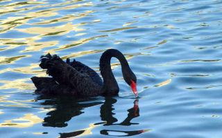 Чёрный лебедь: какие потрясения грозят экономике криптовалют в 2018 году