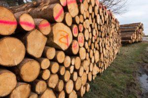 ICO в России и в лесной промышленности