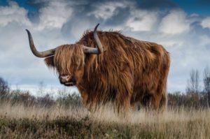 прогноз биткоина быки